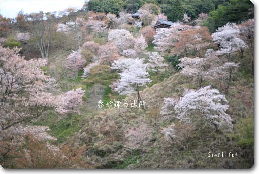 世界遺産 吉野山 吉野桜