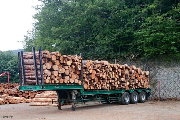 木材市場 岐阜県森林組合連合会 県森連 セリ