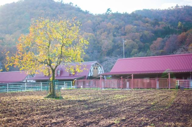 畜産センター 紅葉