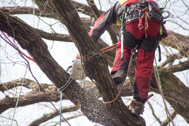 アーボリスト 特殊伐採 ツリークライミング