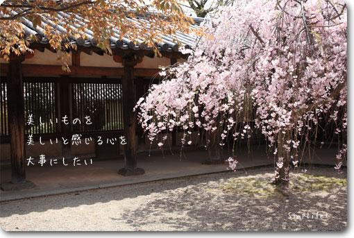 法隆寺 しだれ桜