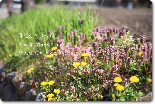 白川郷 春の風景