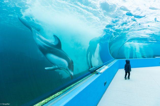 のとじま水族館 能登半島 旅行 ジンベイザメ
