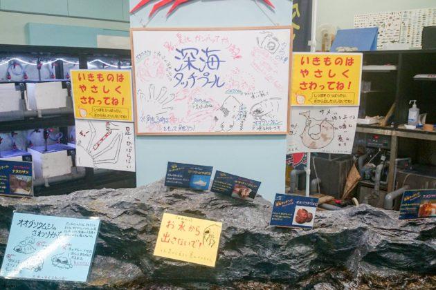 竹島水族館 蒲郡 観光