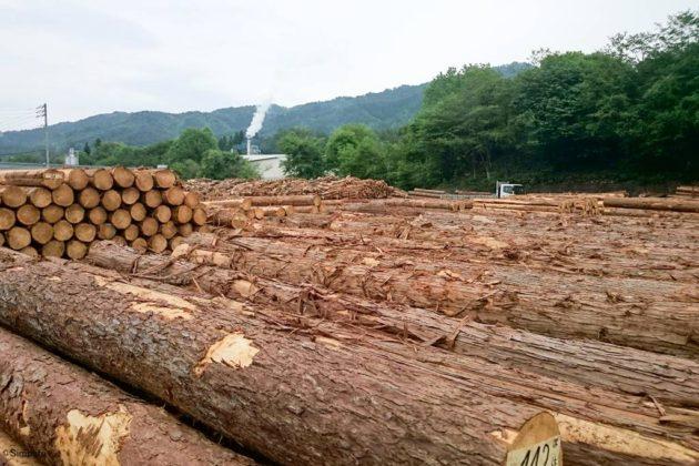 入札 木材市場 岐阜県森林組合連合会 県森連 セリ