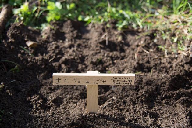 どんぐり 庭 植える クヌギ トトロ