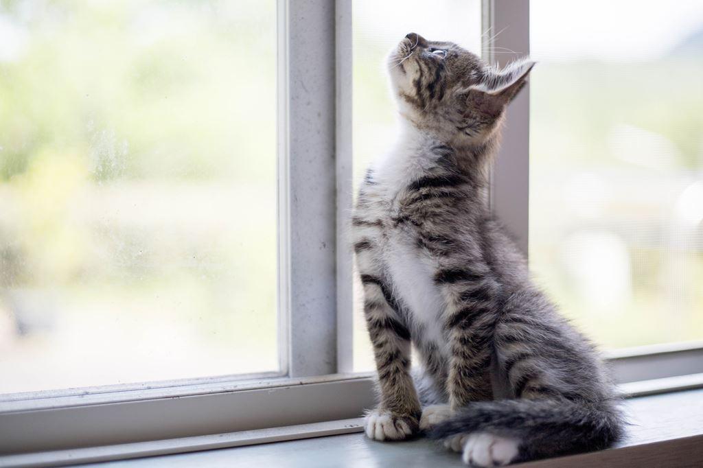 子猫 迷子 飼い猫 保護