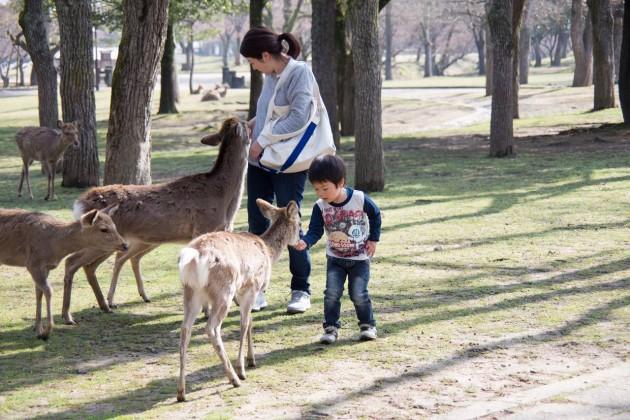 奈良 シカ 鹿