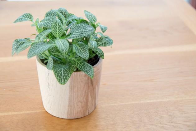 木製 鉢カバー アベマキ フィットニア