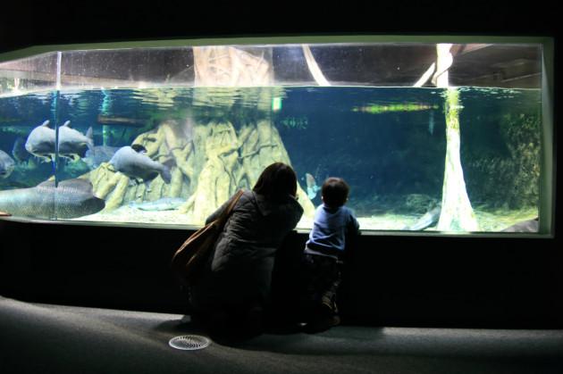 淡水魚水族館アクアトト
